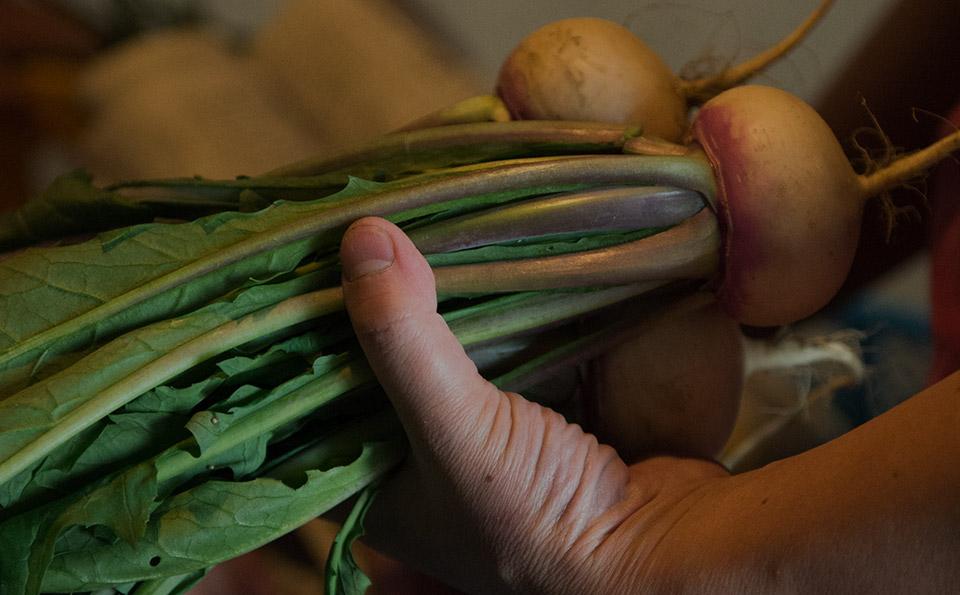 自然栽培で育った野菜