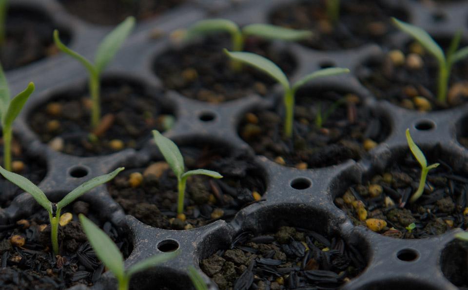無農薬、無肥料で育てる自然栽培