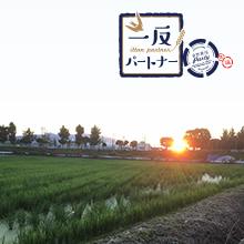 カシオ計算機株式会社さんご支援の「一反パートナー」2018 圃場レポート②