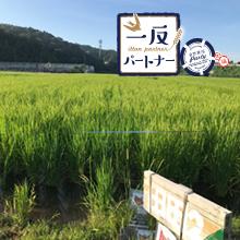 三遠ネオフェニックスさんご支援の愛知・豊川「一反パートナー」2019圃場レポート③