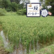 ヤマト福祉財団さんご支援の「一反パートナー農作業参加プログラム」2019 圃場レポート③