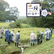 ヤマト福祉財団さんご支援の「一反パートナー」の田んぼで稲刈りを行いました。