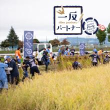 カシオ計算機さんご支援の「一反パートナー」の田んぼで稲刈りを行いました。