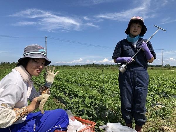 「旬を旅する」畑だより 北海道みのり菜園です!